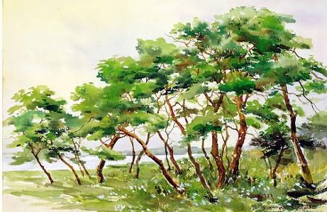 소나무.jpg
